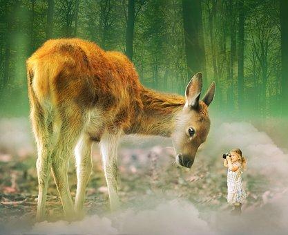 Deer, Girl, Camera, Childhood, Forest, Cute, Nature