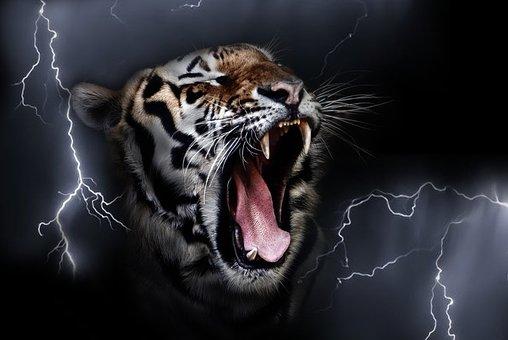 Tiger, Growling Tiger, Predator, Feline, Carnivore