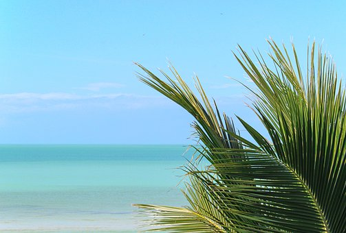 Palm Tree, Ocean, Beach, Horizon, Tropical, View