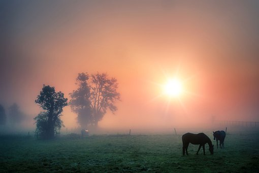 Paddock, Horses, Fog, Morning Fog, Farm, Ranch, Fence