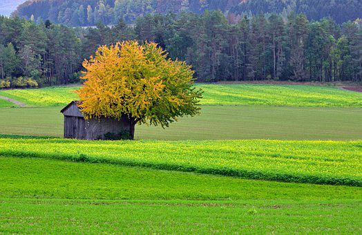 Field, Barn, Countryside, Hut, Meadow, Farm
