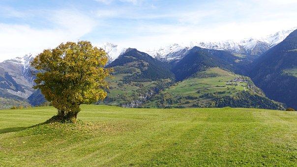 Tree, Valley, Pasture, Mountains, Autumn, Lugnez