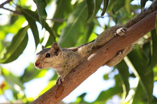 Squirrel, Nature, Rodent, Animal, Wildlife, Wild