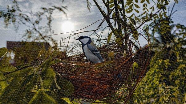 Bird On Nest, Bird, Nest, Rain, Raindrops, Japanese Tit