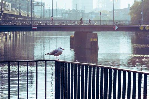 Gull, River, City, Seagull, Bird, Animal, Bridge