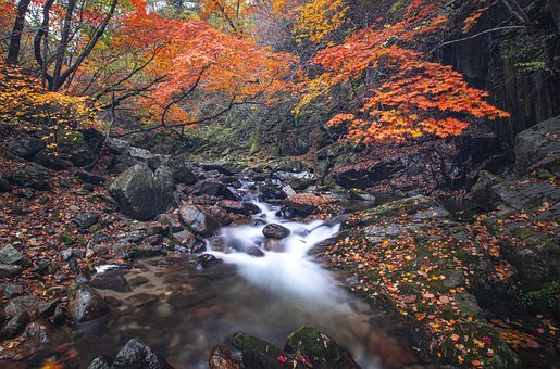 Stream, Forest, Autumn, Fall, Brook, Creek, River