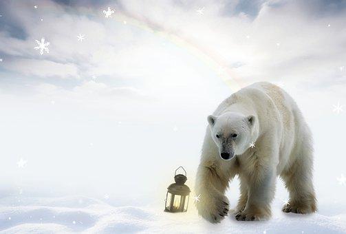 Polar Bear, Snow, Lamp, Photomontage