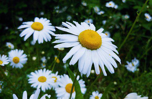 Flowers, Yellow, White, Bloom, Spring, Summer, Plant