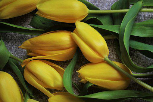 Tulips, Spring Flowers, The Petals, Bouquet