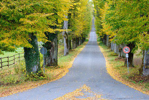 Autumn, Fork Road, Trees, Road, Avenue, Removed