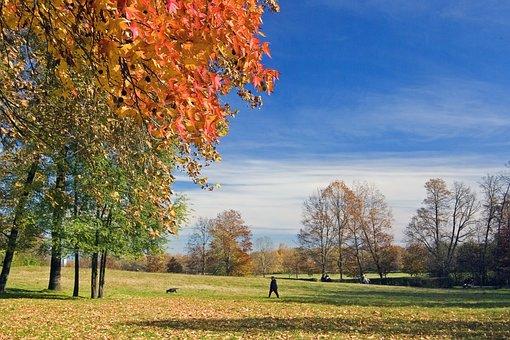 Trees, Man, Dog, Park, Walk, Autumn, Autumn Foliage