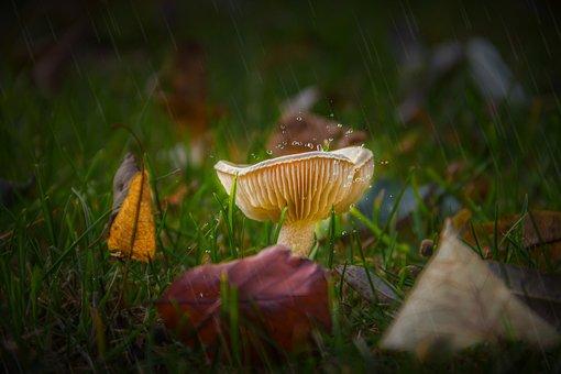Mushroom, Yellow Mushroom, Lamella, Grass