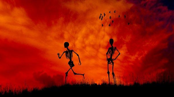 Sunset, Skeletons, Silhouette, Birds, Flying