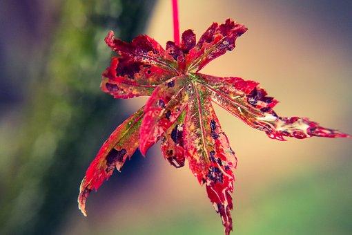 Leaf, Foliage, Colorful, Autumn