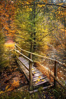 Autumn, Leaves, Bridge, Autumn Colours