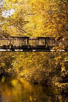 Bridge, River, Forest, Autumn, Leaves, Trees