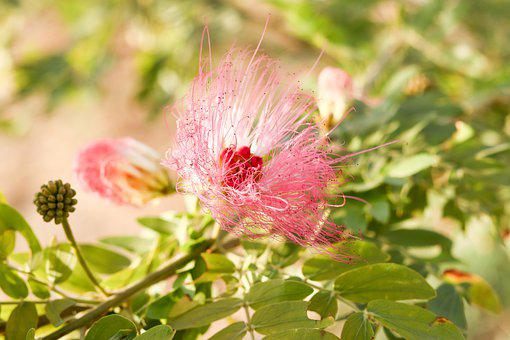 Flower, Petals, Buds, Leaves, Foliage, Delicate, Flora
