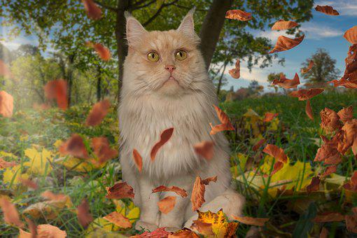 Cat, Main Coon, Pet, Domesticated, Leaves, Animal, Fur