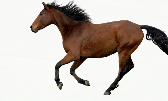 Horse, Stallion, Animal, Equine, Brown Horse, Mammal