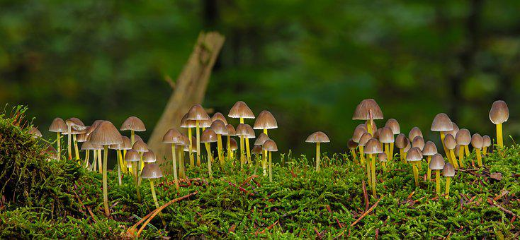 Mushrooms, Moss, Small Mushrooms, Forest Ground