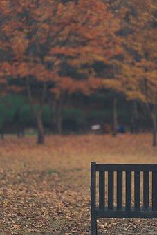 Bench, Autumn, Fall, Nature, Park