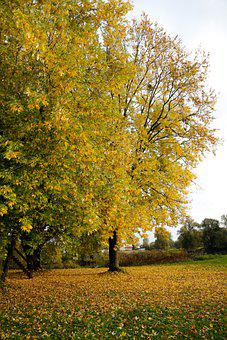 Trees, Leaves, Fall Foliage, Plants