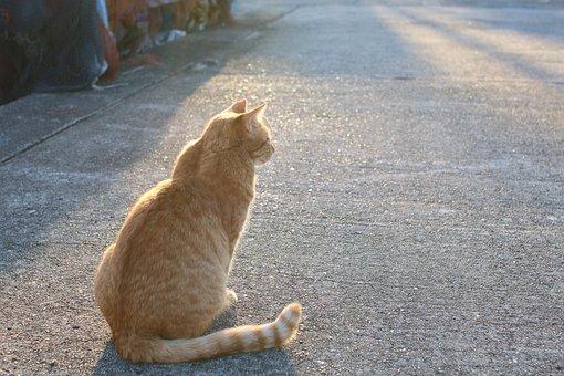 Cat, Street Cat, Animal, Stray Cat