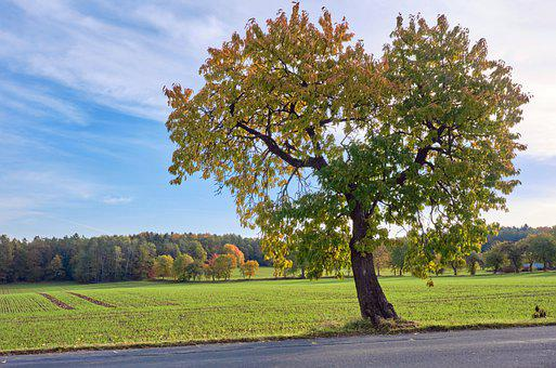 Autumn, Tree, Fields, Farm, Meadow, Autumn Colors