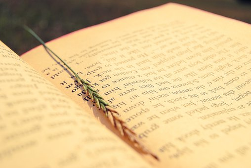 Book, Pages, Bookmark, Open Book, Chapter, Novel, Read