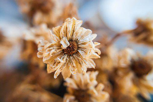 Flower, Petals, Dry, Death, Plant