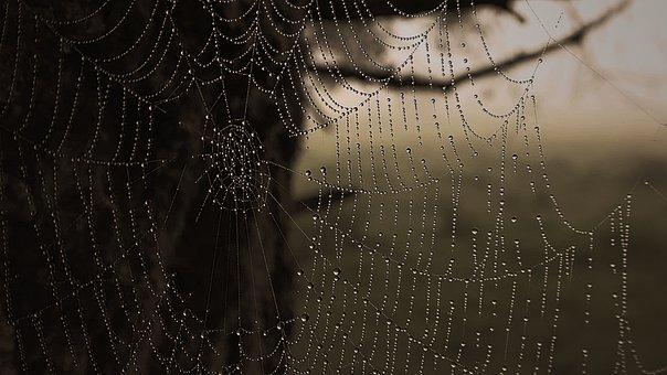Web, Cobweb, Dew, Dewdrops, Droplets, Spider Web