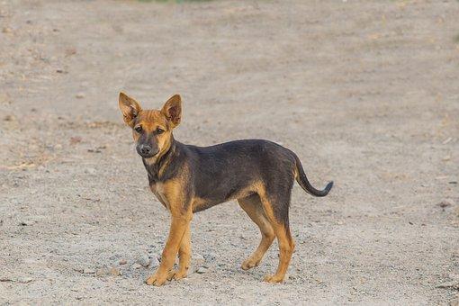 Puppy, Dog, Pet, Animal, Cute, Canine