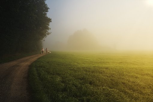 Trees, Field, Trail, Pathway, Fog, Forest, People, Dogs