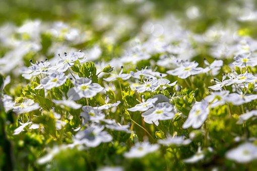 Flowers, Field, Meadow, Field Of Flowers, Flower Meadow