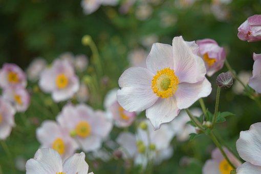 Flowers, Bloom, Plants, Blossom, Flora