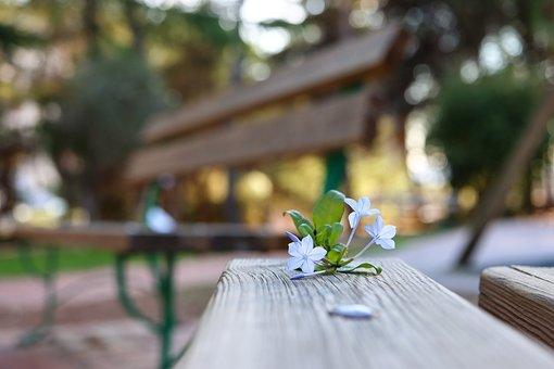 Cape Leadwort, Flowers, Bench, Blue Flowers