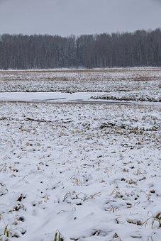 Field, Hoarfrost, Snow, Trees, Forest, Wintry