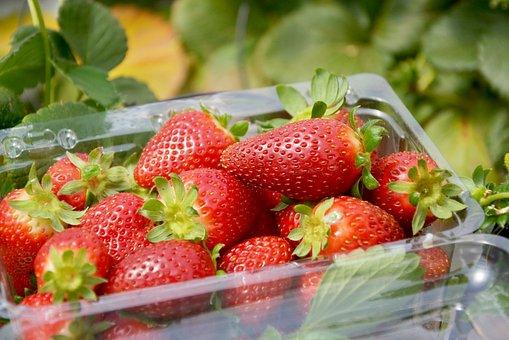 Strawberries, Fruits, Berries, Harvest, Produce