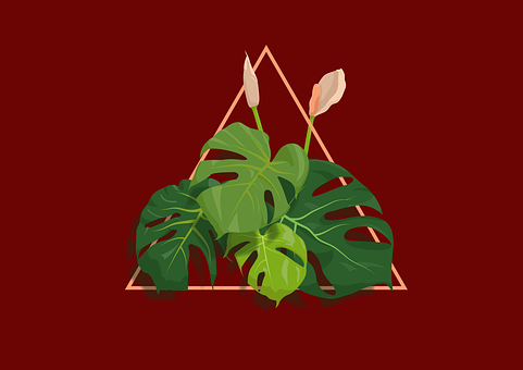 Plant, Monstera, Design, Logo, Leaves, Indoor Plant