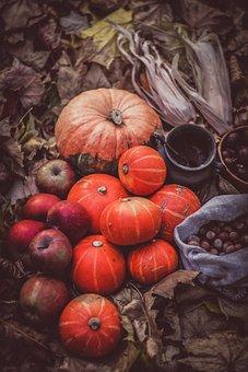 Pumpkins, Treat, Apples, Halloween, Park, Harvest