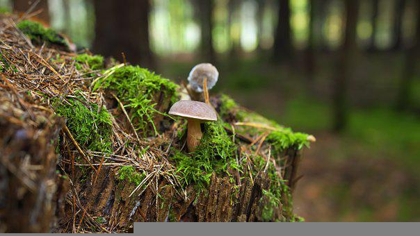 Mushrooms, Moss, Stump, Tree Stump, Small Mushrooms