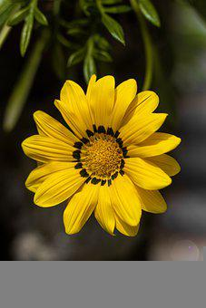 Treasure Flower, Flower, Plant