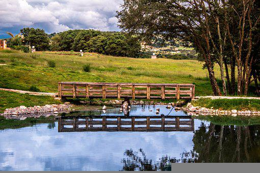 Pond, Bridge, Park, Trees, Grass, Wooden Bridge