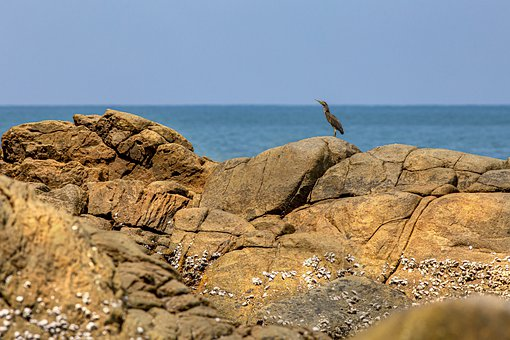 Heron, Bird, Coast, Rocks, Seaside