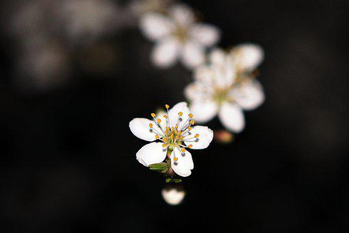 Flower, Apple, Bloom, Blossom, Garden, Tree, Fruit
