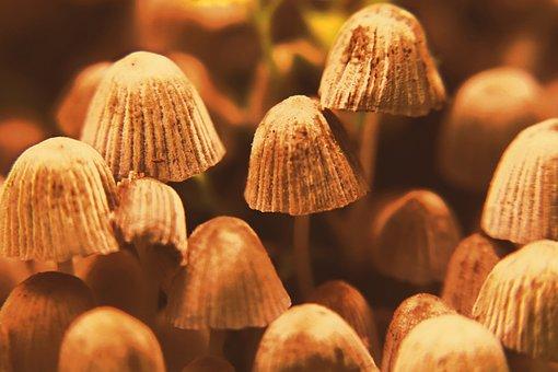Mushrooms, Wild Mushrooms, Spore, Sponge, Fungus