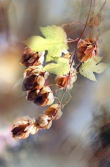 Pine Cones, Cones, Tree, Branch, Autumn, Color, Leaves