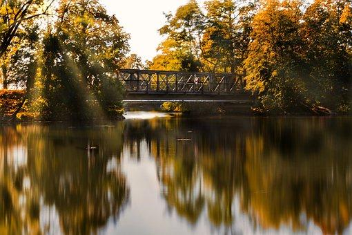 Bridge, River, Trees, Woods, Woodlands, Foliage