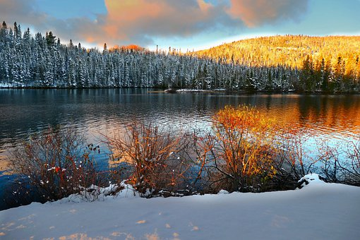 Lake, Snow, Trees, Woods, Coast, Water