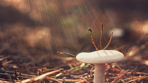 Mushroom, Toadstool, Forest, White Mushroom